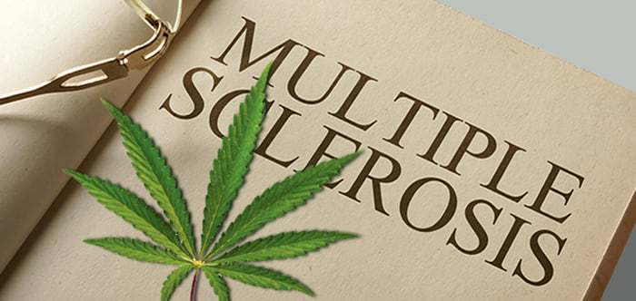 A cannabis leaf on a document titled Multiple Sclerosis