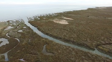 How do salt marshes cope with storm surges? - School of