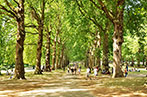 People walking through a tree-lined pathway in Green Park, London