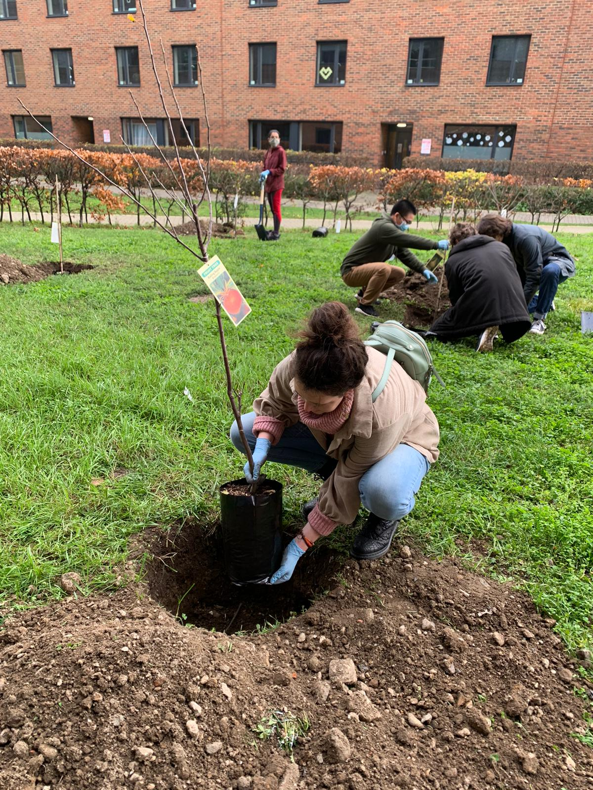 Students planting an orchard