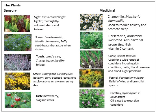 A description of plants from the medicinal and sensory garden