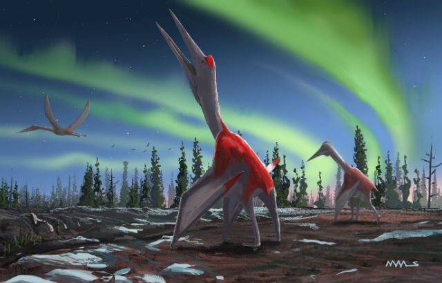 Largest flying animal in history identified