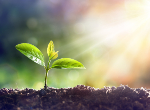 Young plant growing in sunlight. Credit:iStock.com/RomoloTavani