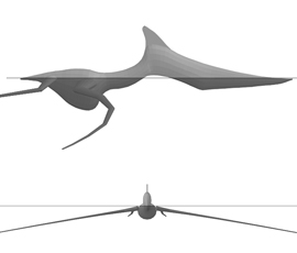 Computer simulation of pterosaurs