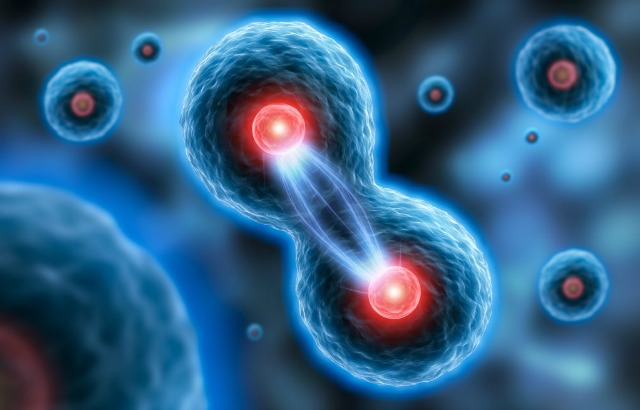 Smd - Researchers Discover How Human Cells Maintain The Correct Number Of Chromosomes