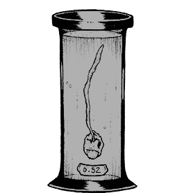 Specimen in a jar