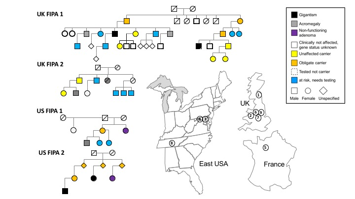 Pedigrees of the English founder AIP c.805_825dup (p.F269_H275dup) mutation and geographical locations.